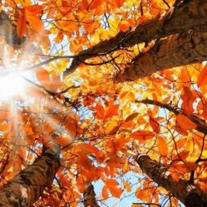 symptoms of autumnal Asthenia