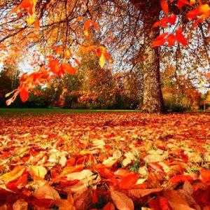 autumnal asthenia