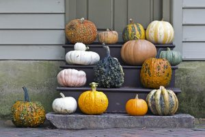 Why should we have pumpkins in the fall?