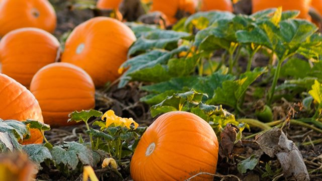 ideas for eating seasonal foods